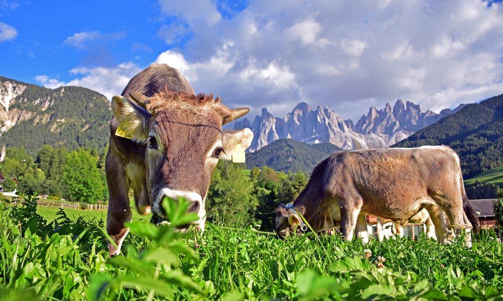 Landleben genießen im Urlaub auf dem Bauernhof in Villnöss