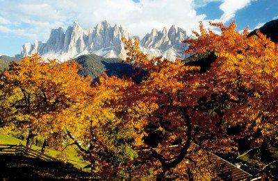 Goldener Herbst - Törggelewochen