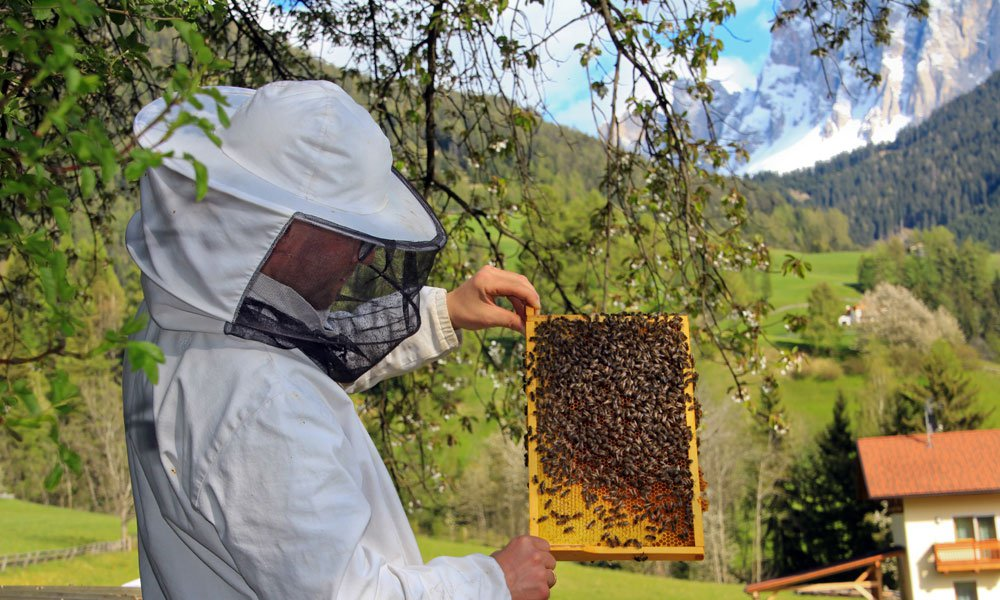 Beekeeping at the farm in Funes