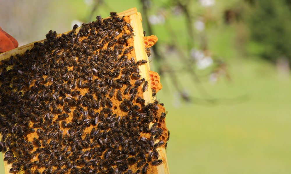 Interesting facts about honey