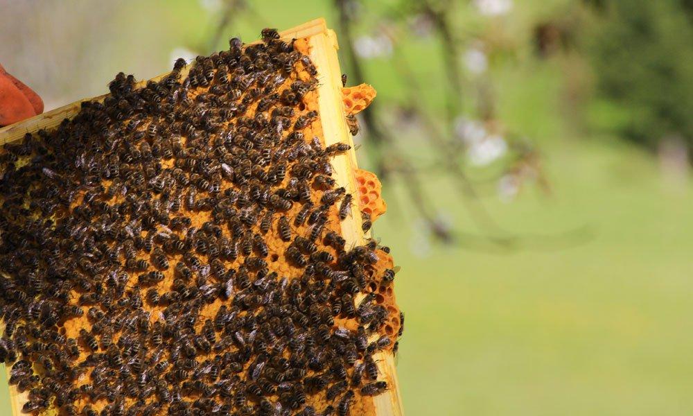 Wissenswertes über Honig